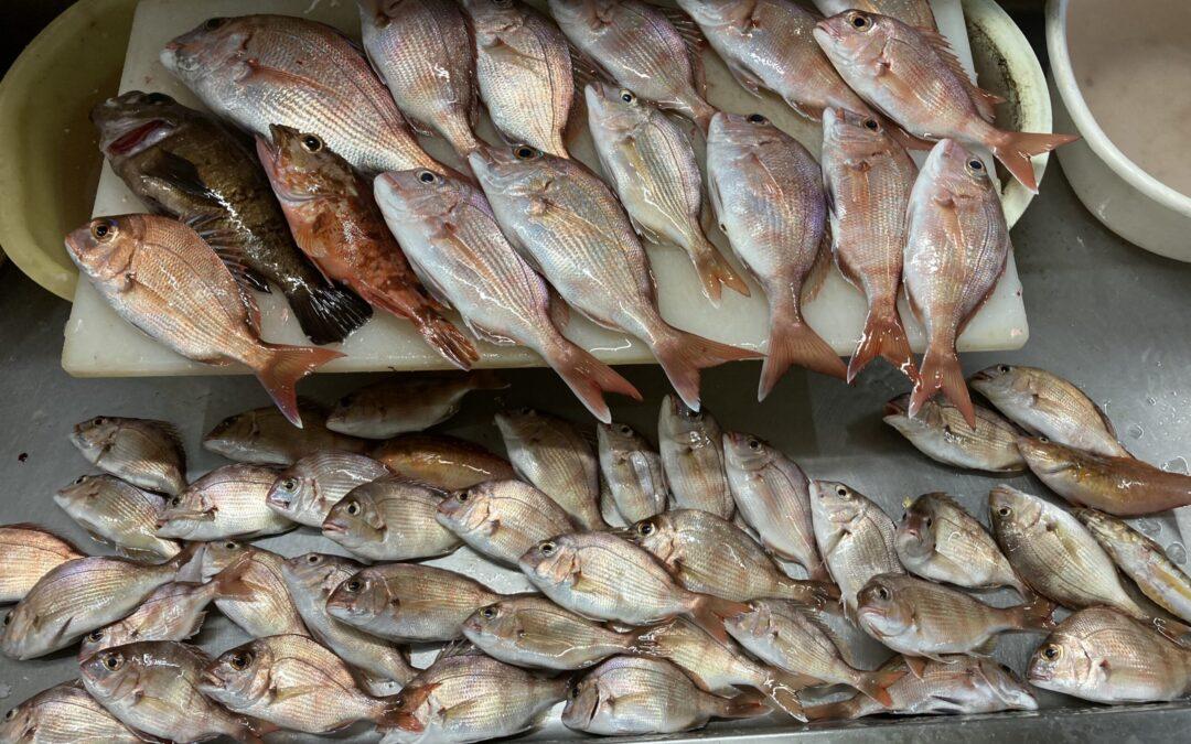 本日のまつしん丸「釣った魚定食」